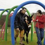 ¡ Terapia asistida con burros !