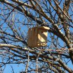 Nuevas casas para las aves de la viña