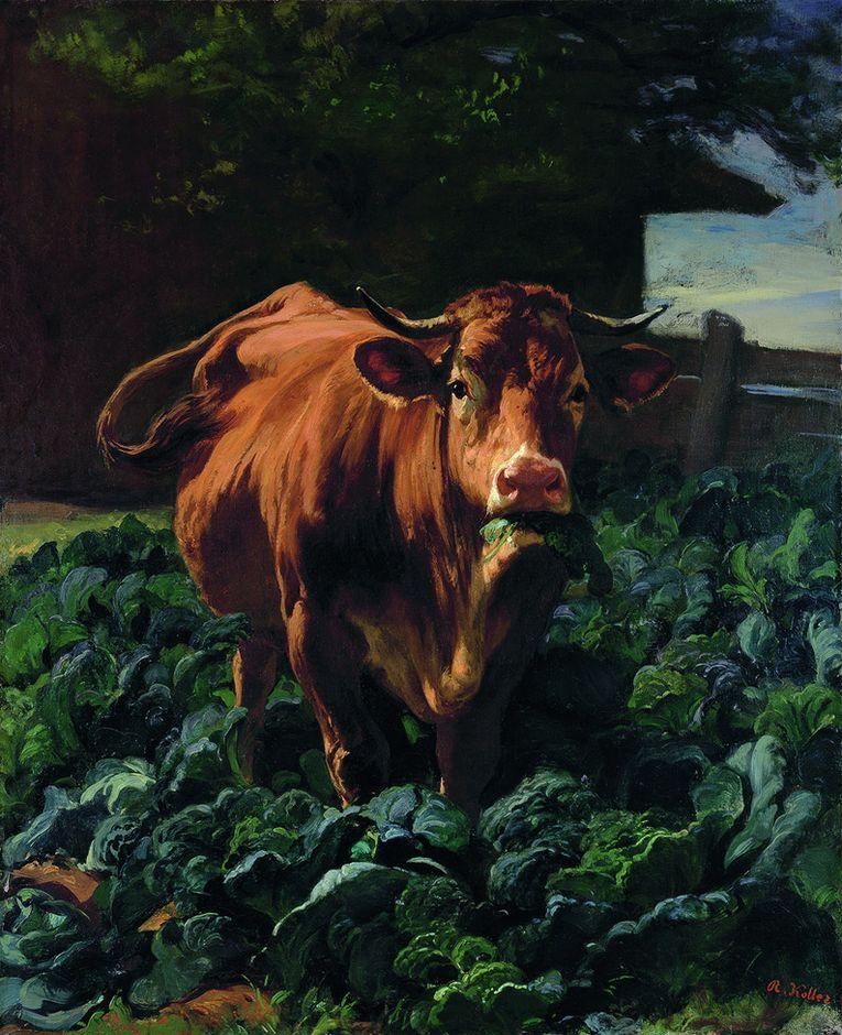 Rudolf Kollner, vaca en un campo de coles